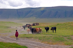 Tanzania: Masai and Cattle in Ngorongoro Crater